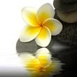 fleur de frangipanier sur galets sombres