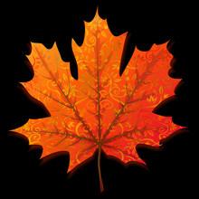 Jesień pomarańczowy liść klonu samodzielnie na czarnym tle