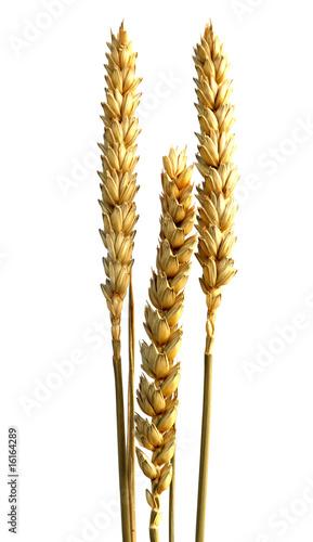 3 épis de céréales - 16164289