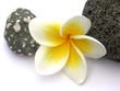 fleur de frangipanier et galets