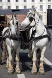 Two Harness Horses poster