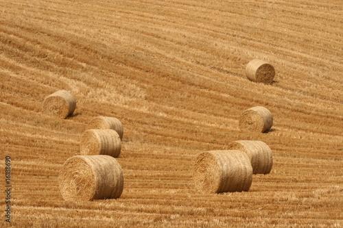 straw everywhere - 16188690