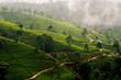 Hochland von Sri Lanka mit Teeplantagen im Nebel