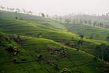 Hochland von Sri Lanka mit Teeplantagen im Nebel poster