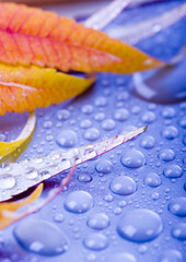 Wet colorful leaves and water