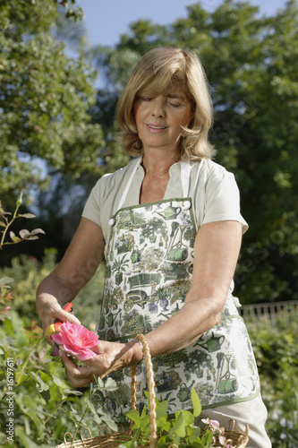 Woman pruning roses in garden