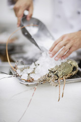 Chef covering fresh lobster with ice