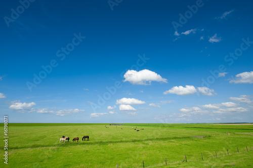 Fototapeten,agricultural,pferd,hintergrund,tier
