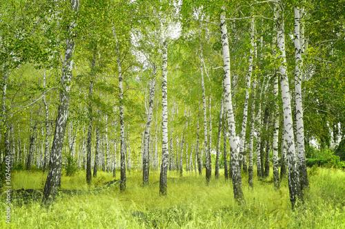 Aluminium Berkbosje Birchs