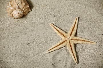 stella marina e conchiglia
