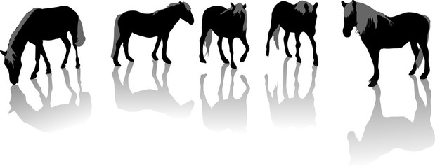 chevaux silhouettes