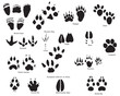 animal traces