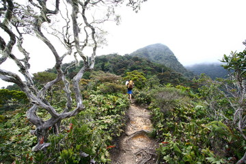 Climbing Mount Kinabalu