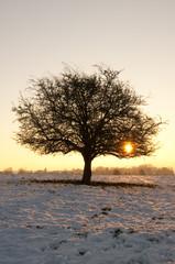 Paysage champêtre couvert de neige