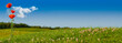 champs de coquelicots sur fond de ciel bleu - nature verte