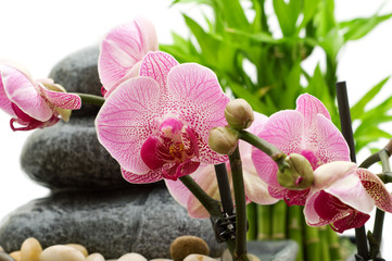 pink orchid, stack of stones and bamboo leaves