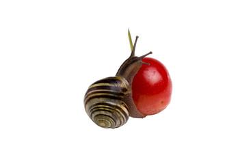 Snail n Cherry
