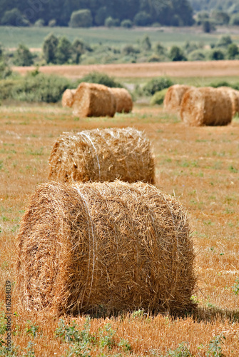 Autumn field and straw piles