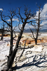Mammoth Hot Spring in Yellowstone ©2009 GecoPhotography