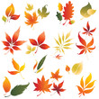 Set of vector autumn leafs design elements 2. Thanksgiving