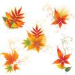 Vector set of  autumn leafs design elements. Thanksgiving
