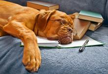 "Постер, картина, фотообои ""Dog Sleeping after Studying"""