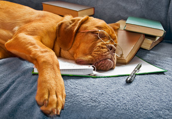 Dog Sleeping after Studying