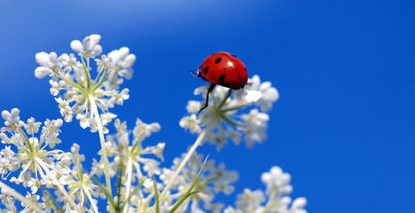 ladybeetle looking for a way