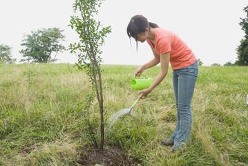 木に水をやる女性