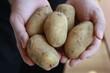 Kartoffel - Mann hält Kartoffeln - Man is showing potatoes