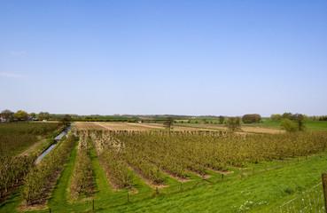 Dutch orchard