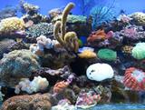Coral is Saltwater Aquarium poster
