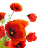 Fototapety floral design, decoration flowers, poppies border - corner