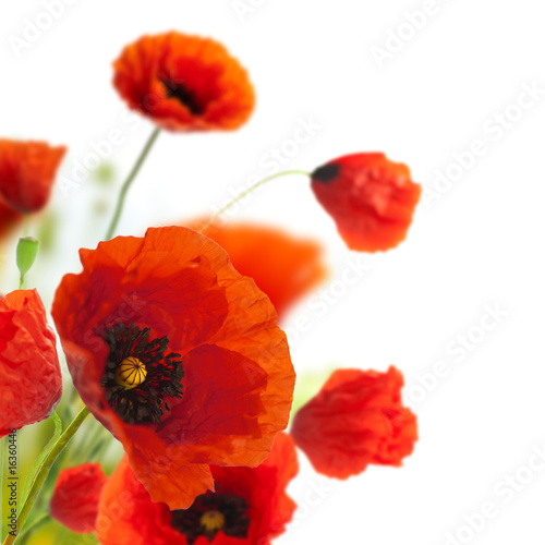 Keuken foto achterwand Poppy floral design, decoration flowers, poppies border - corner