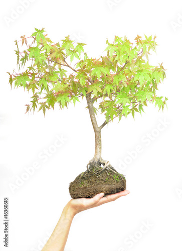 Hand holding tree on white