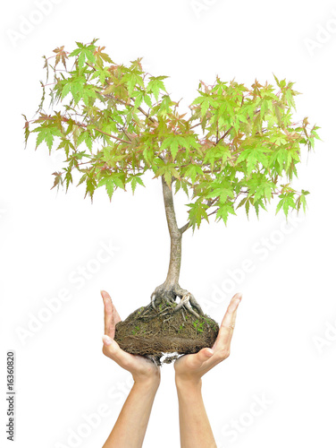Hands holding tree on white