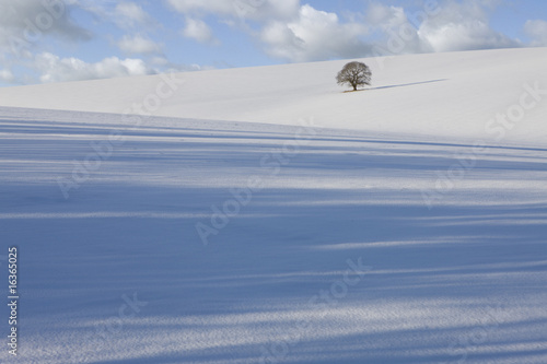 Tree in snowy field