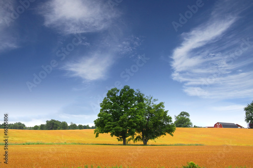 Scenic Landscape In Wheat Fields