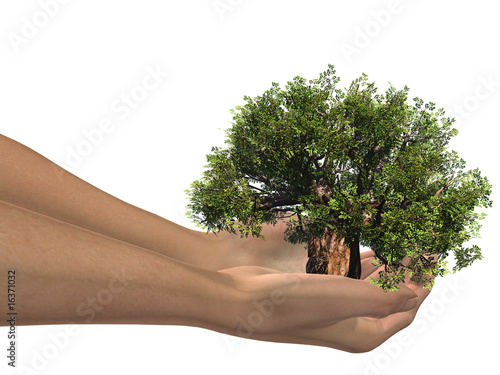 3D hands holding a 3D green baobab tree