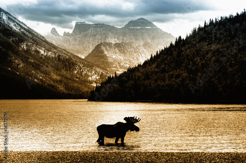 fototapete morgenstimmung elch im waterton see vor m chtigem bergpanorama. Black Bedroom Furniture Sets. Home Design Ideas