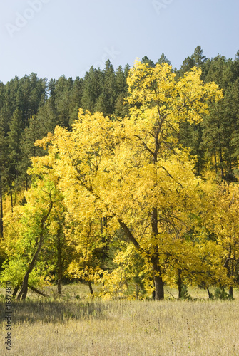 Fall Colors in the Black Hills 15