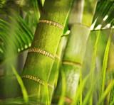 Fototapety Green plant close-up