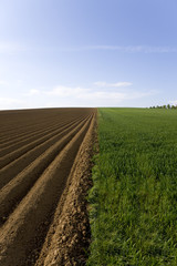 Ploughed field next to young wheat field