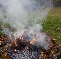 smokey fall