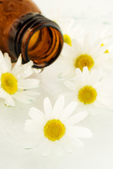 Massage oil from chamomile flower