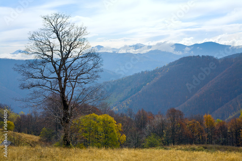 bare tree in autumn mountain