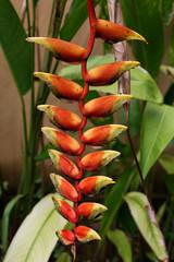 Exotische Blume auf Bali