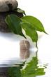 composition minérale et végétale