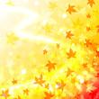 舞い散る紅葉