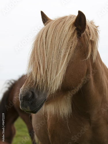 Fototapeten,pferd,isny,schlagen,mähne